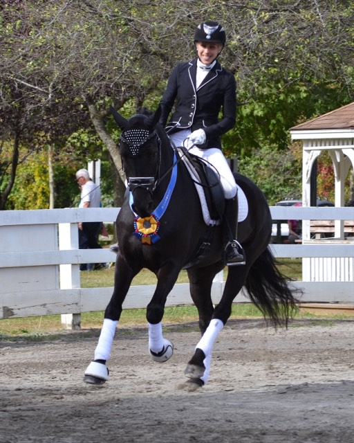 "Canadream Kelbeck YouAndMe aka ""Toque"".  In 2015 (as a 4 yr old) Toque was the first Canadian Horse to compete at Dressage at Devon, winning the under saddle competition. Was ESDCTA Reserve Champion in Second Level in 2018 and will be moving up to Third Level this year.  Ridden and trained by Eliza Puttkamer=Banks."