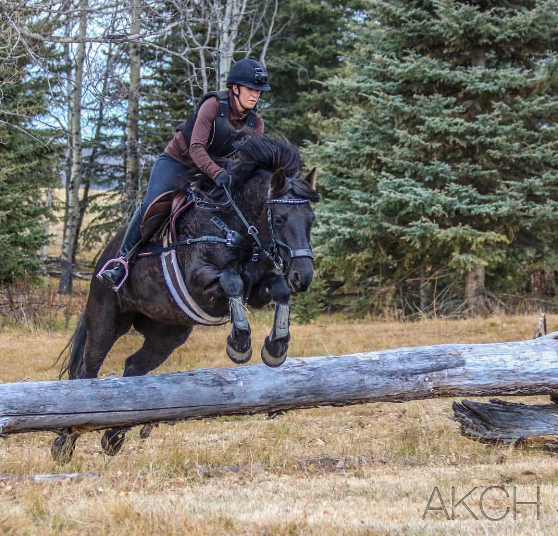 """Cache Phenom Zarra aka """"Costa"""" . Owned and ridden by Kelly Hamzic, Costa is competitive in Novice Eventing, 3' Hunters, 3' Jumpers, and Amateurs Extreme Cowboy Challenge. Photo: Hamzic Photography."""