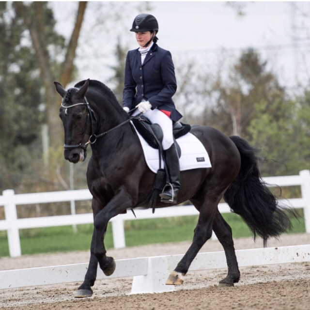 """Apple Valley Watson Royaldaltn aka """"Royal"""" / """"Bangarang"""".  Owned and ridden by Ainsley Elizabeth Kee. Royal aka """"Bangarang"""" has successfully competed at First Level Dressage and is currently schooling Second Level. Photo: AA Photography (Chandra Burke)"""