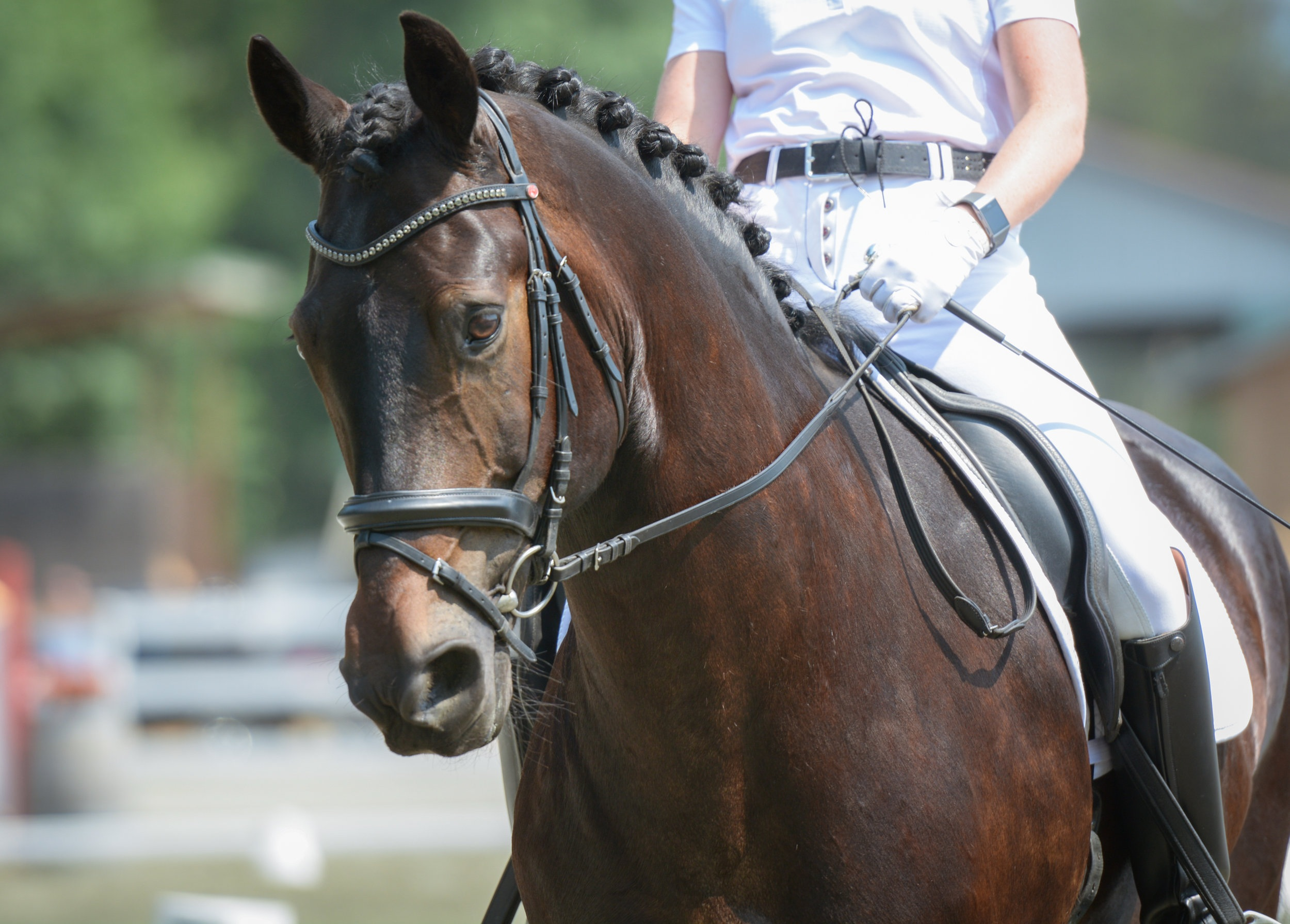 Hilton+Sahara+-2018+Champion+Second+Level+Dressage+BC+Marion+Photography+DSC_5279.jpg
