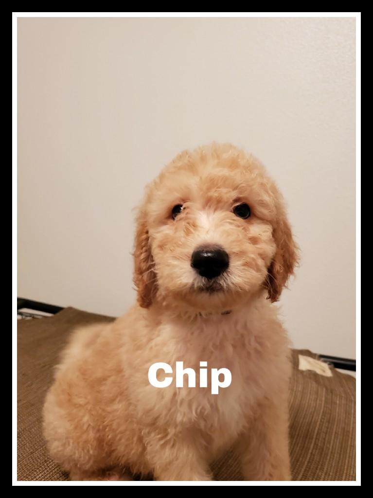 Chip).jpg