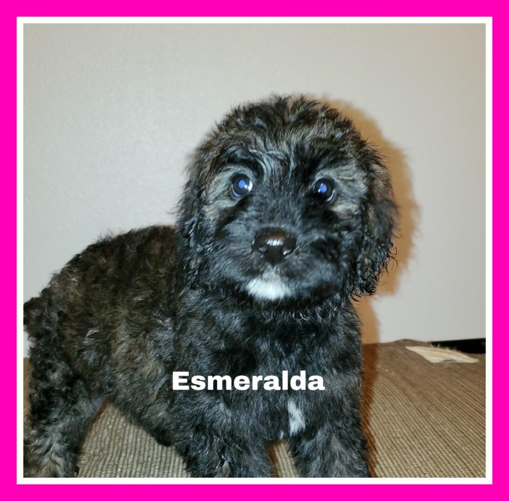 Esmeralda.jpg