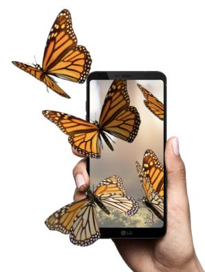 QG Monarch butterflies smaller.jpg