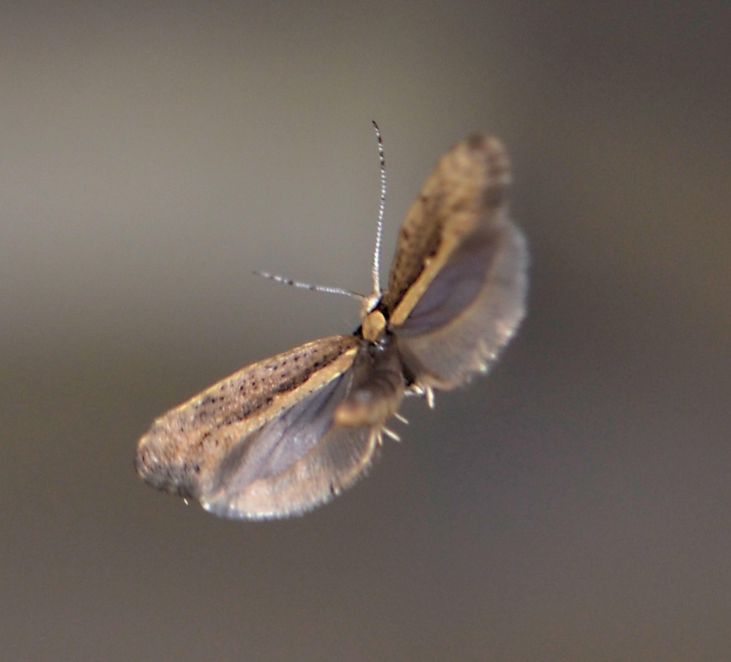 Flying moth.jpg