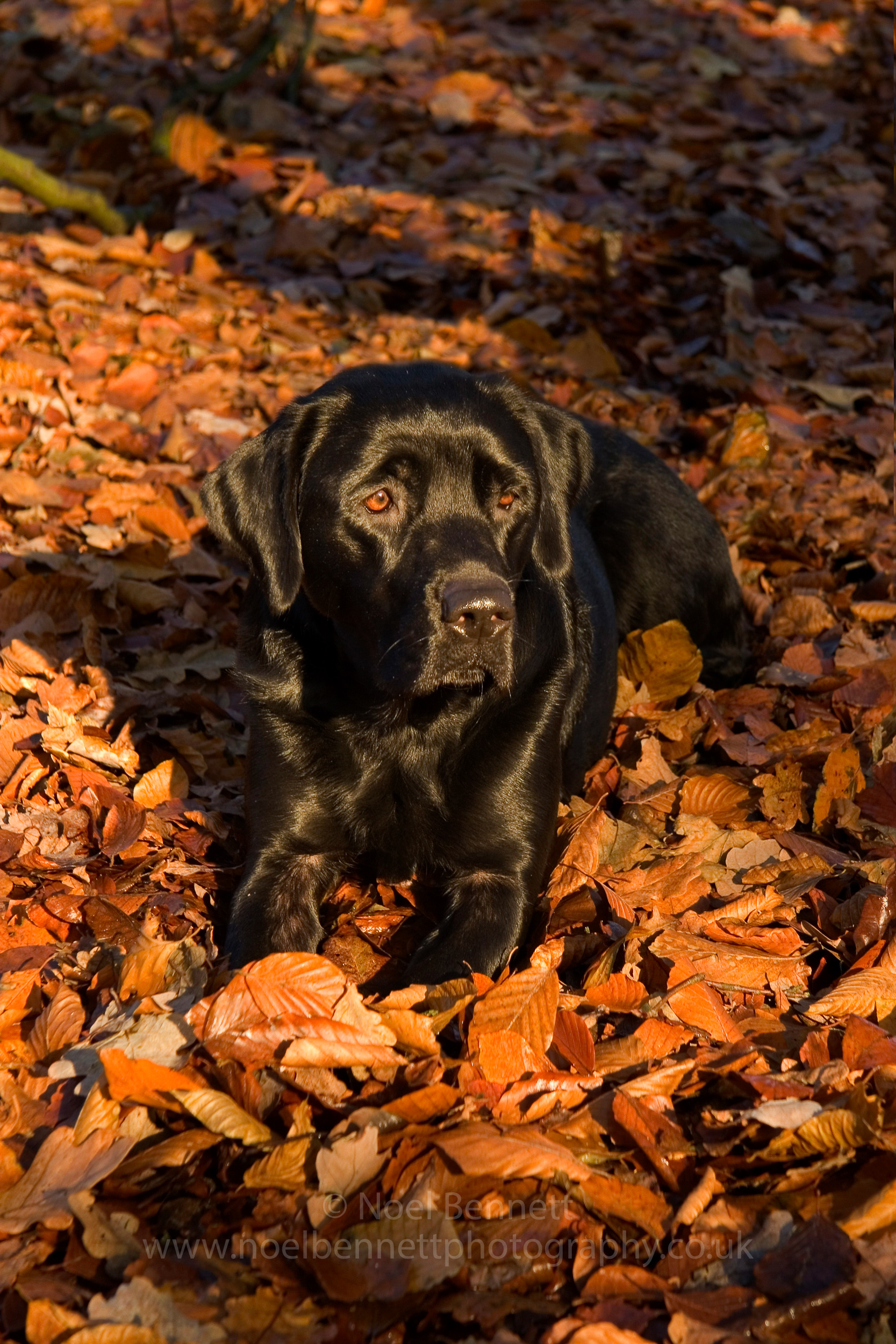 Megan In Autumn Leaves