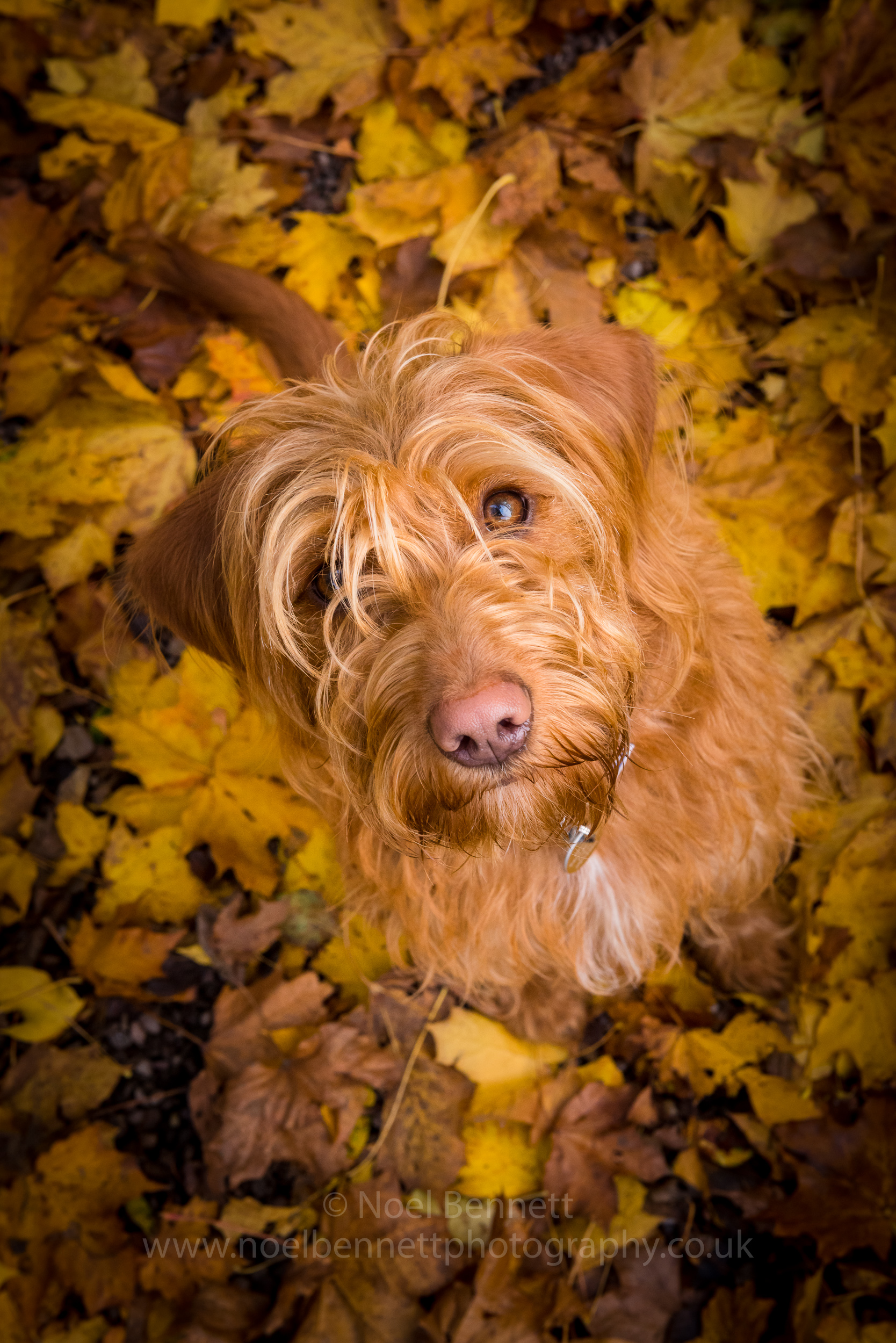 Bella In Autumn Leaves
