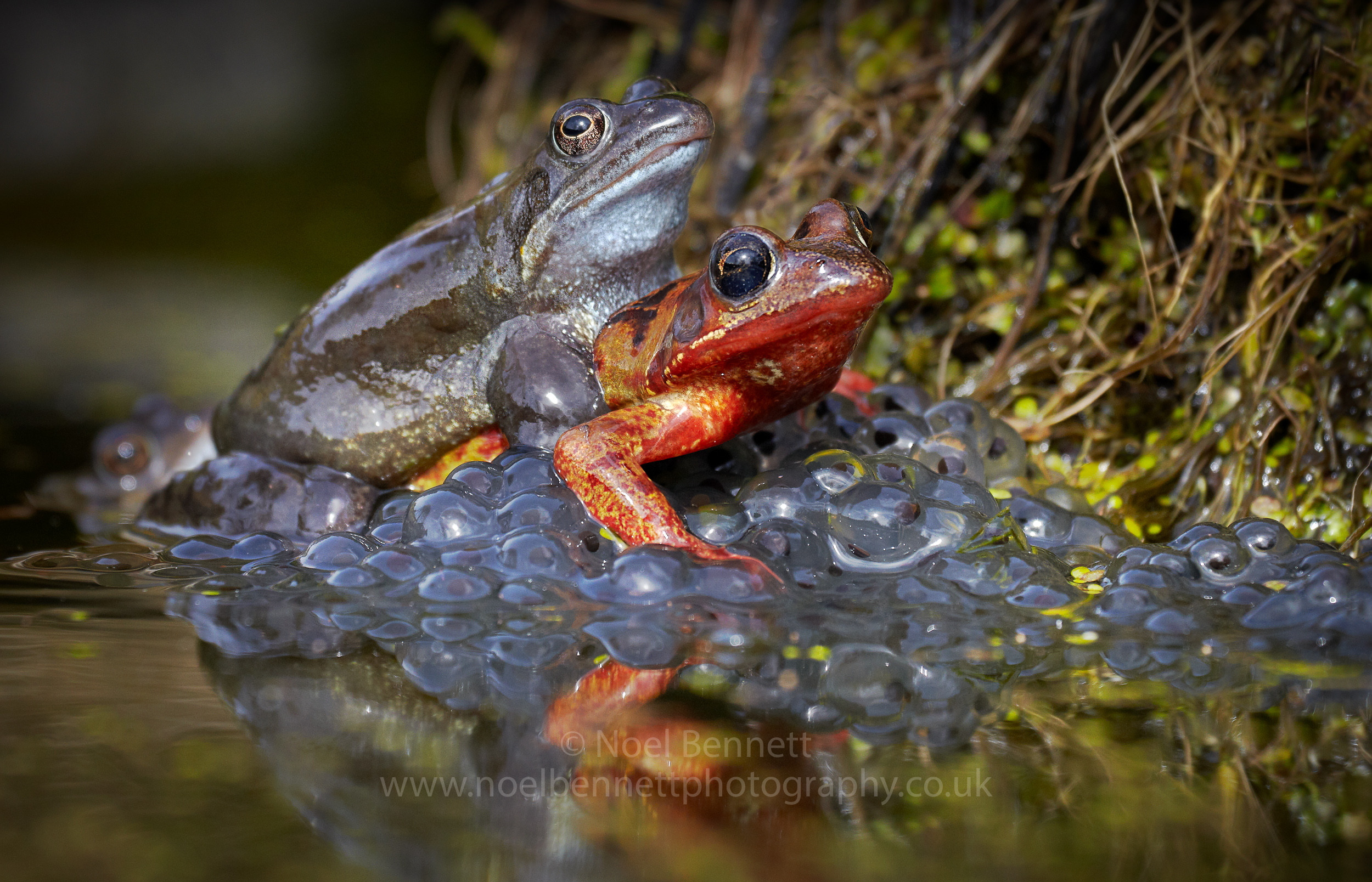 Frogs On Spawn