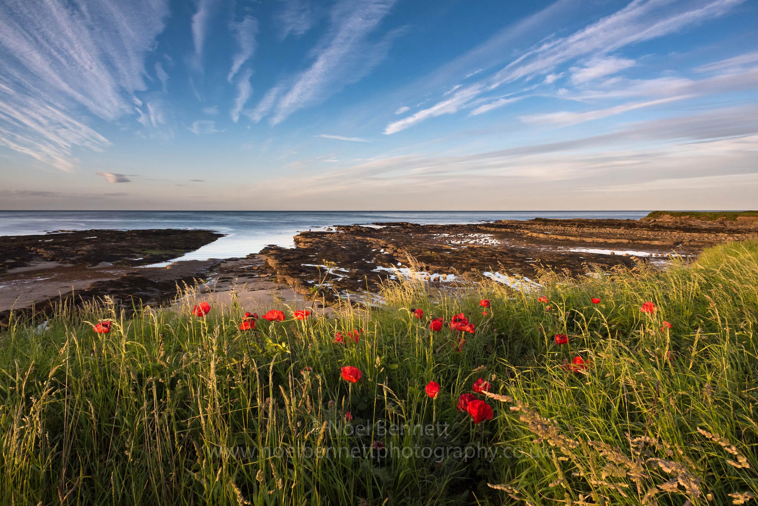 Poppies At Beadnell