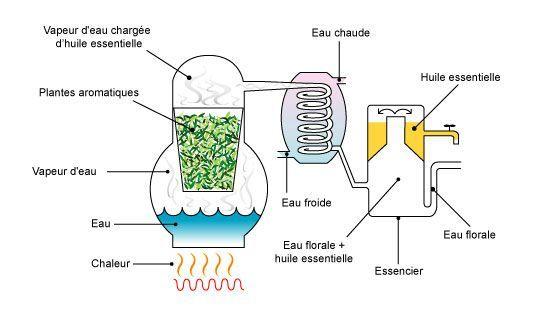 Distillation huile essentielle. - techniques d'extraction