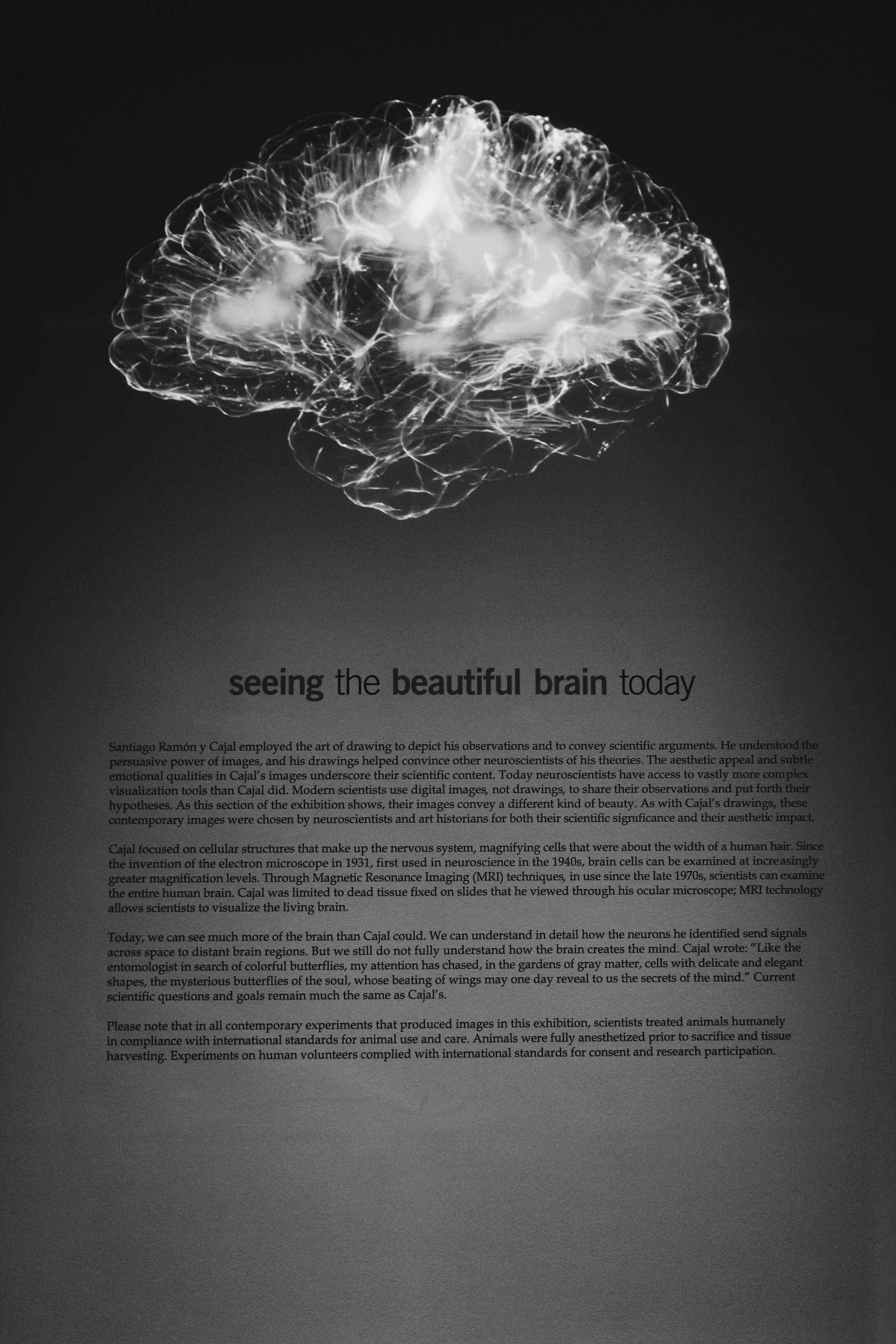 brain and neuroscience of work effective productivity and motivation.jpg