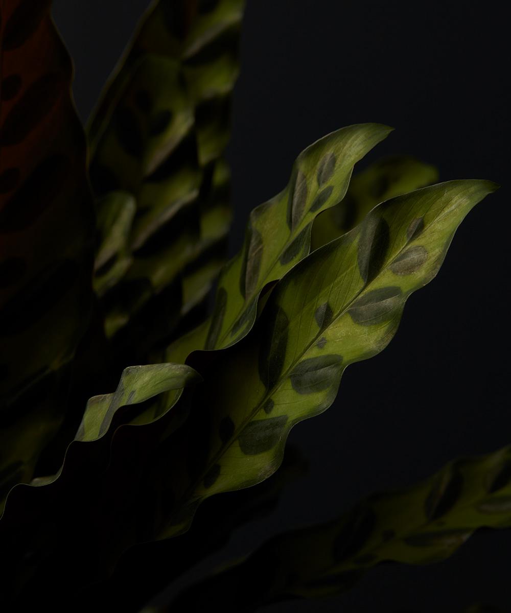 plant-textures-2.jpg