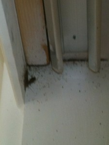 Roaches and excrement in crevice above closet door.