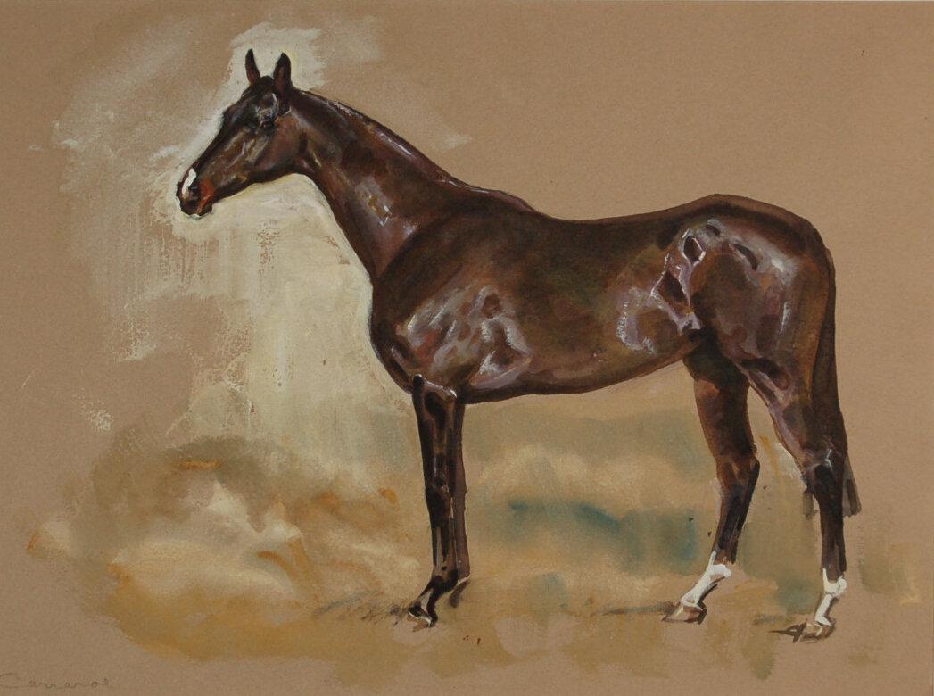 M Lyne #10 Dark Bay Horse Carraroe.jpg