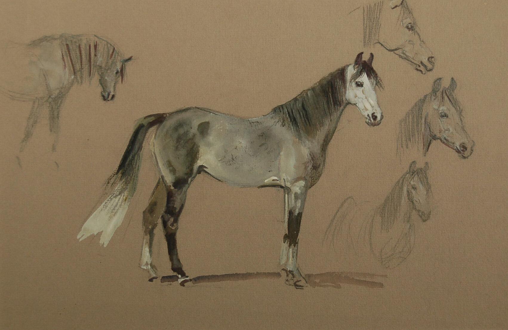 M Lyne #12 Studies of an Arabian Horse.jpg