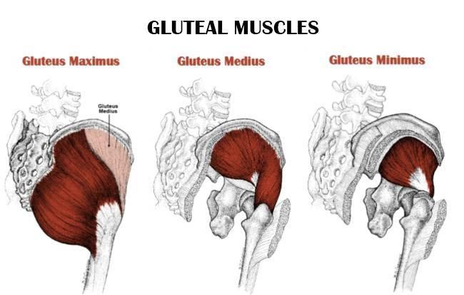 gluteal-muscles.jpg
