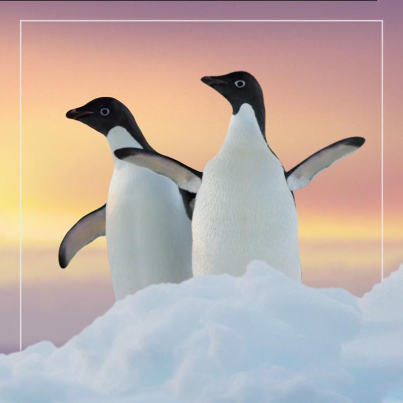 penguins  out of home+av