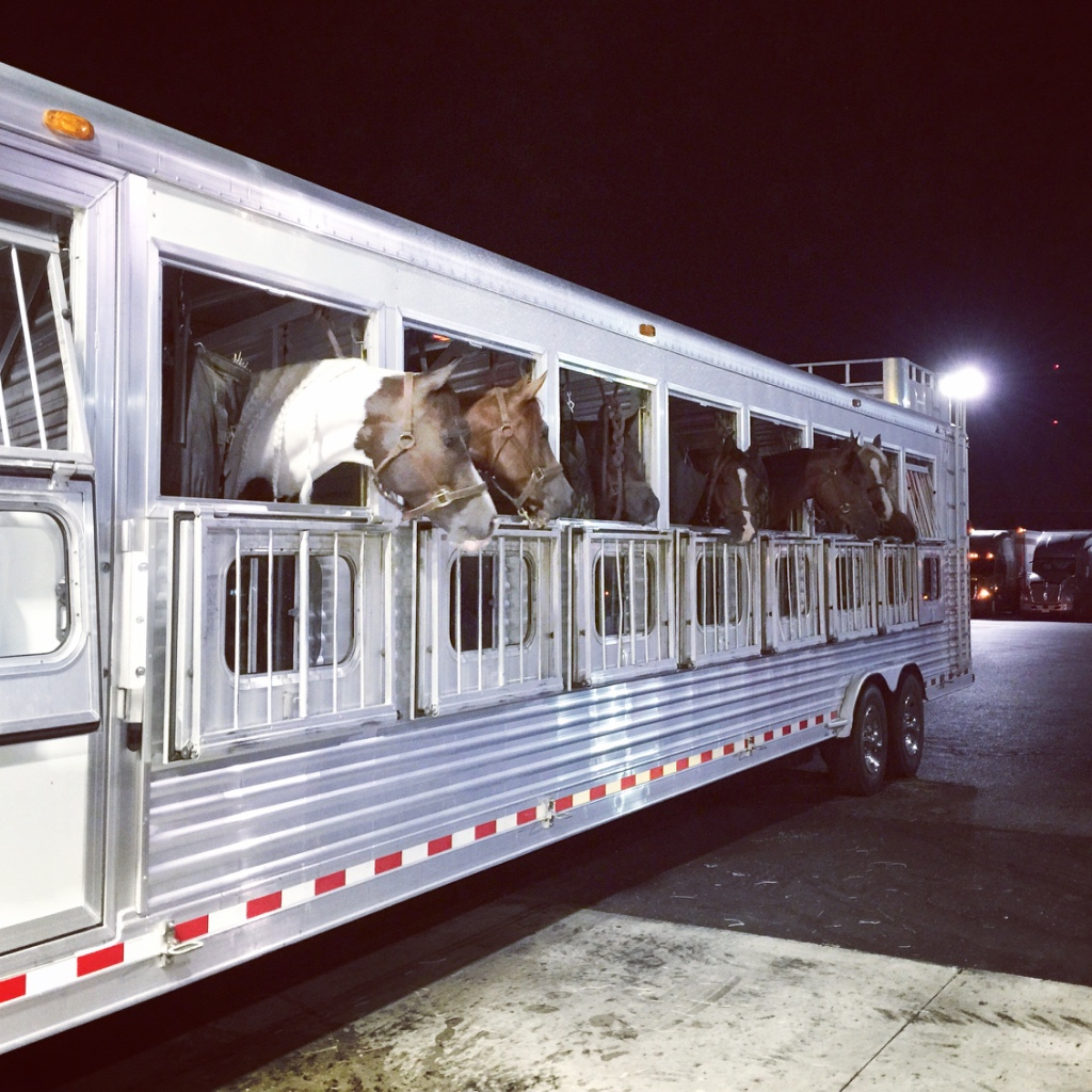 Shows >> Training + More - Happy horses at a fuel stop on the way back from Arabian Nationals in Tulsa, OK.