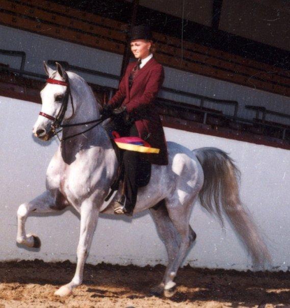 MFA Mazel Tov(Rampage V x La Kelila) - Purebred Arabian gelding shown with titles in Country Pleasure, Show Hack, English Sidesaddle, Native Costume, Hunter and Halter.