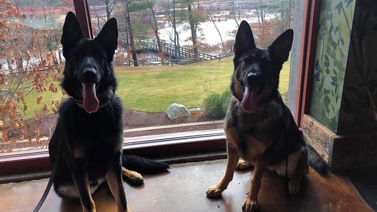 find a good dog trainer in grafton ma