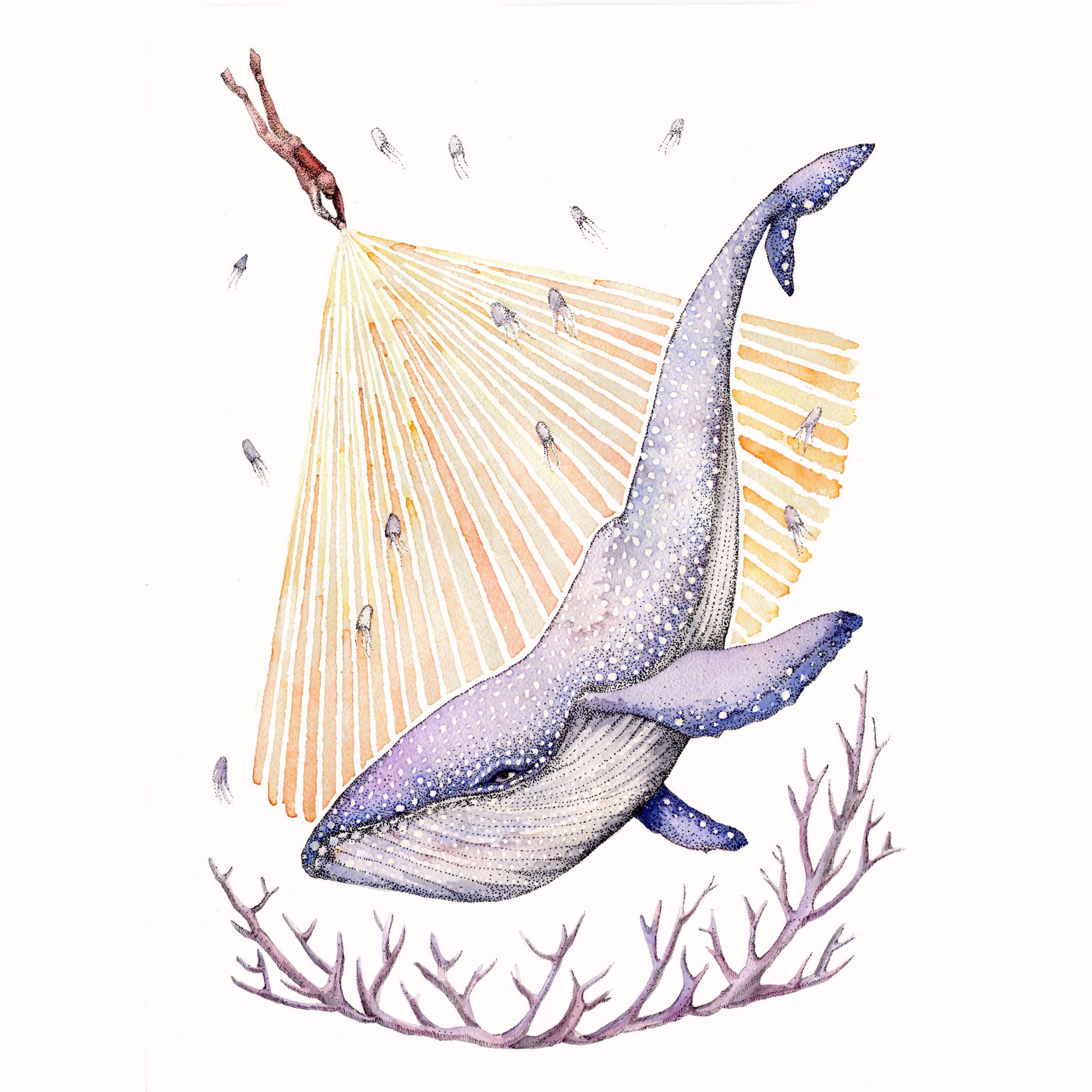 FS-Thumbnail-Whale.jpg