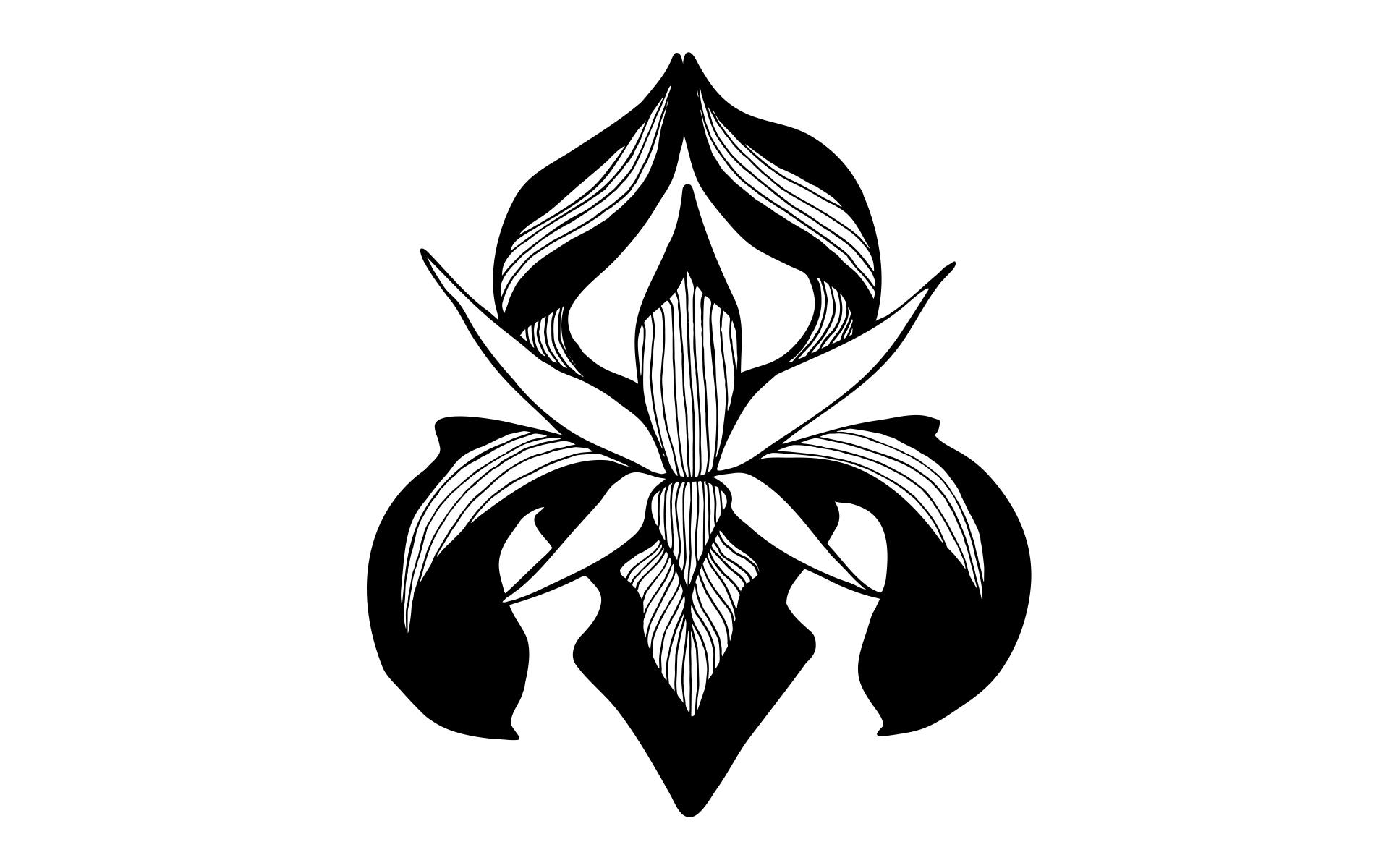 iris-web.jpg