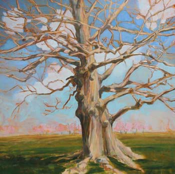Grand oak  •