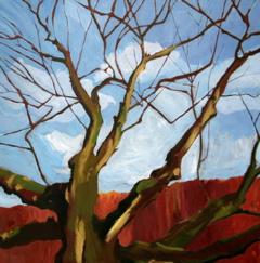 Reaching oak  •