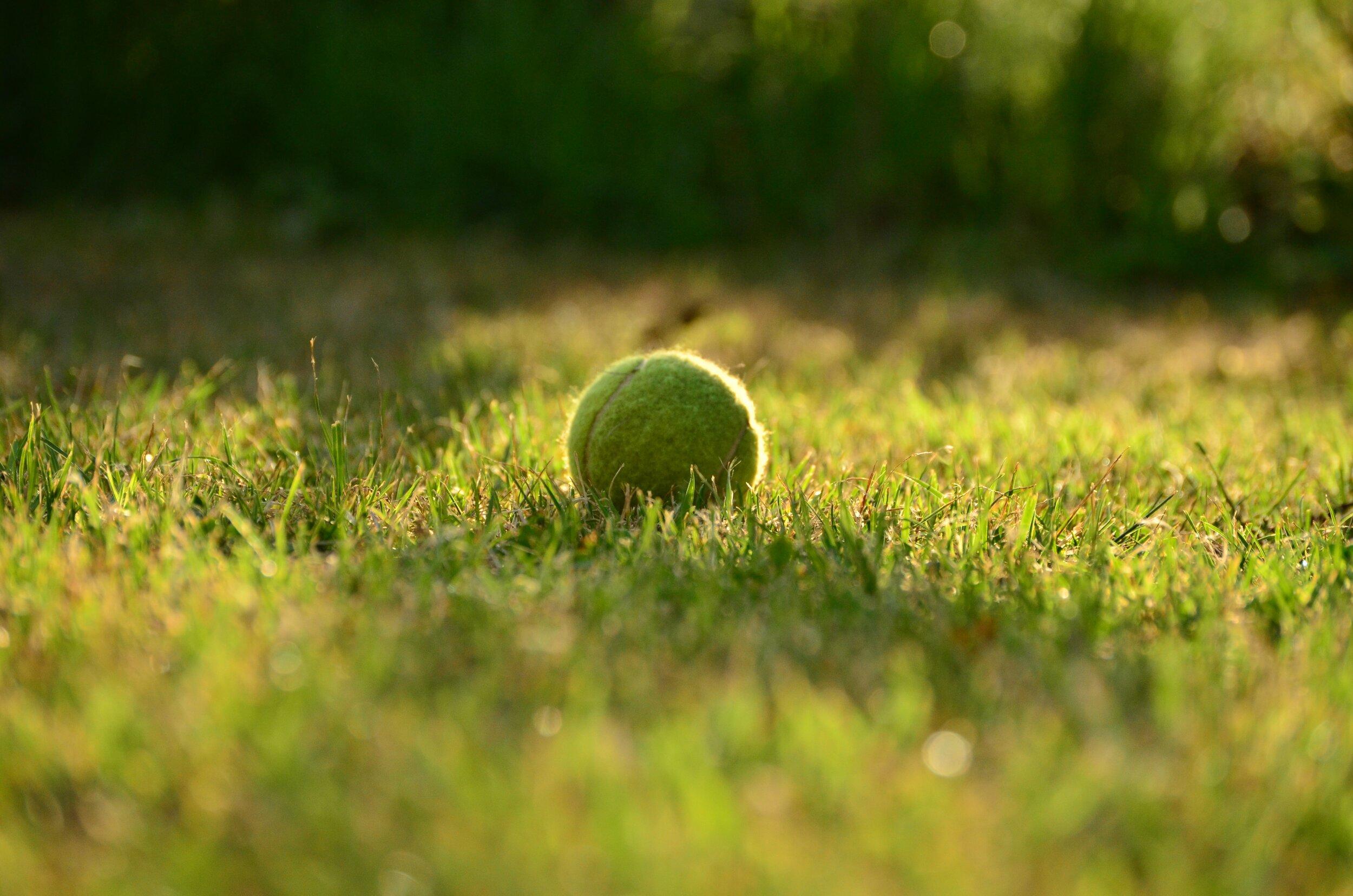 Tennis Ball in Grass
