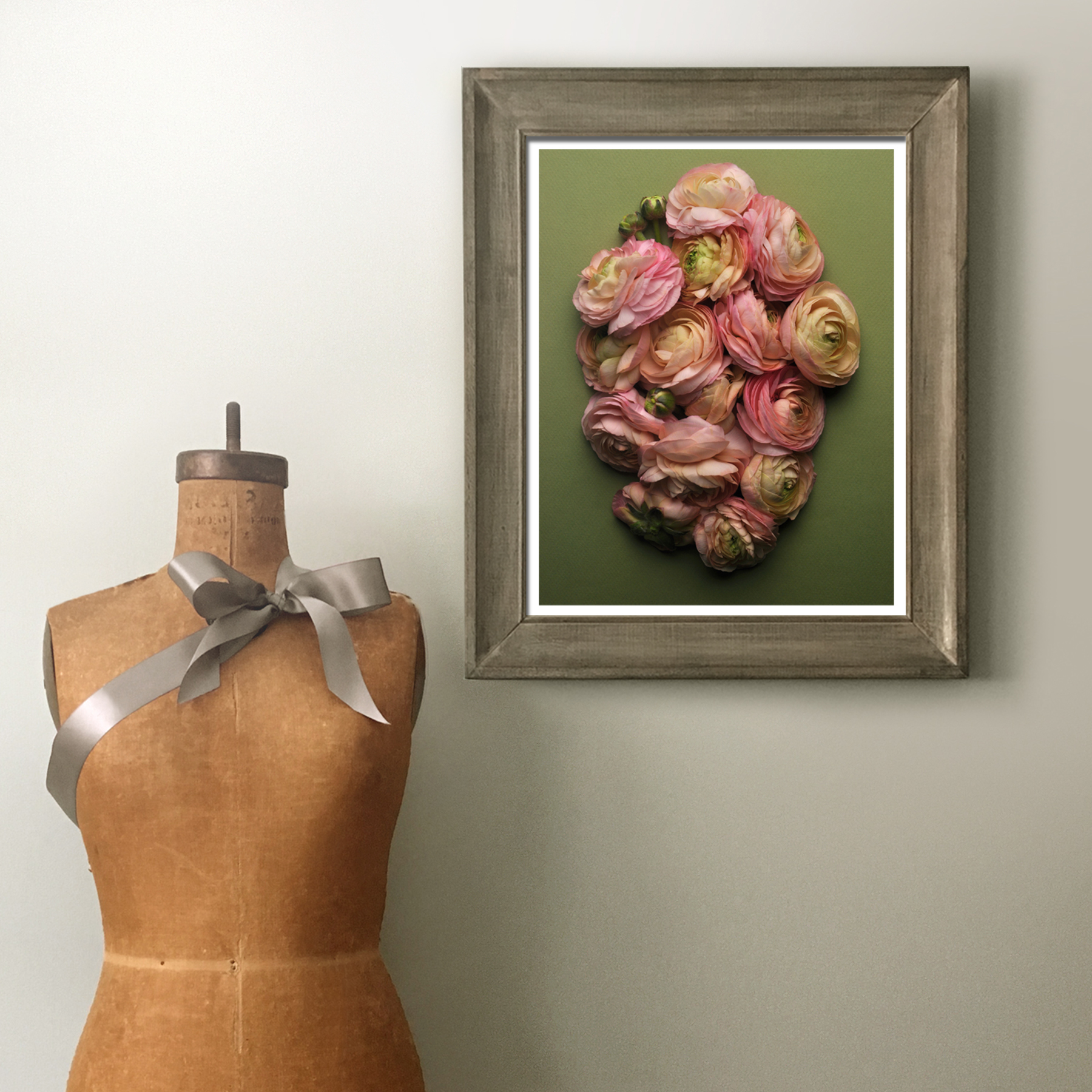 Ranunculus in the Studio for Scale