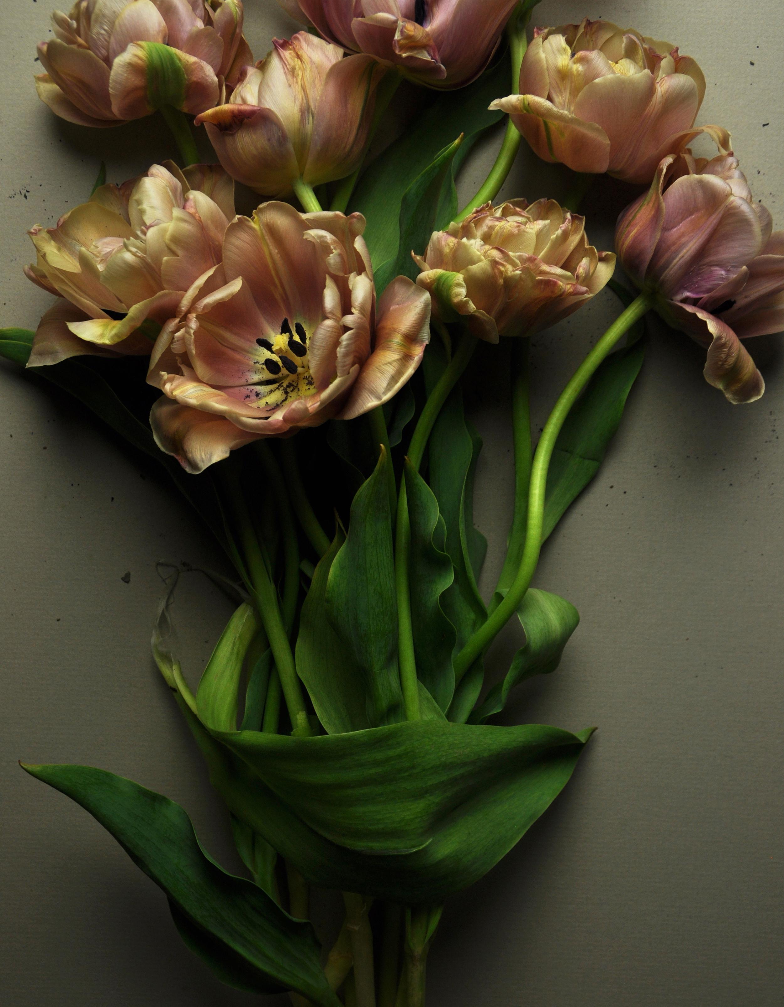 Belle Epoque Tulips No 1
