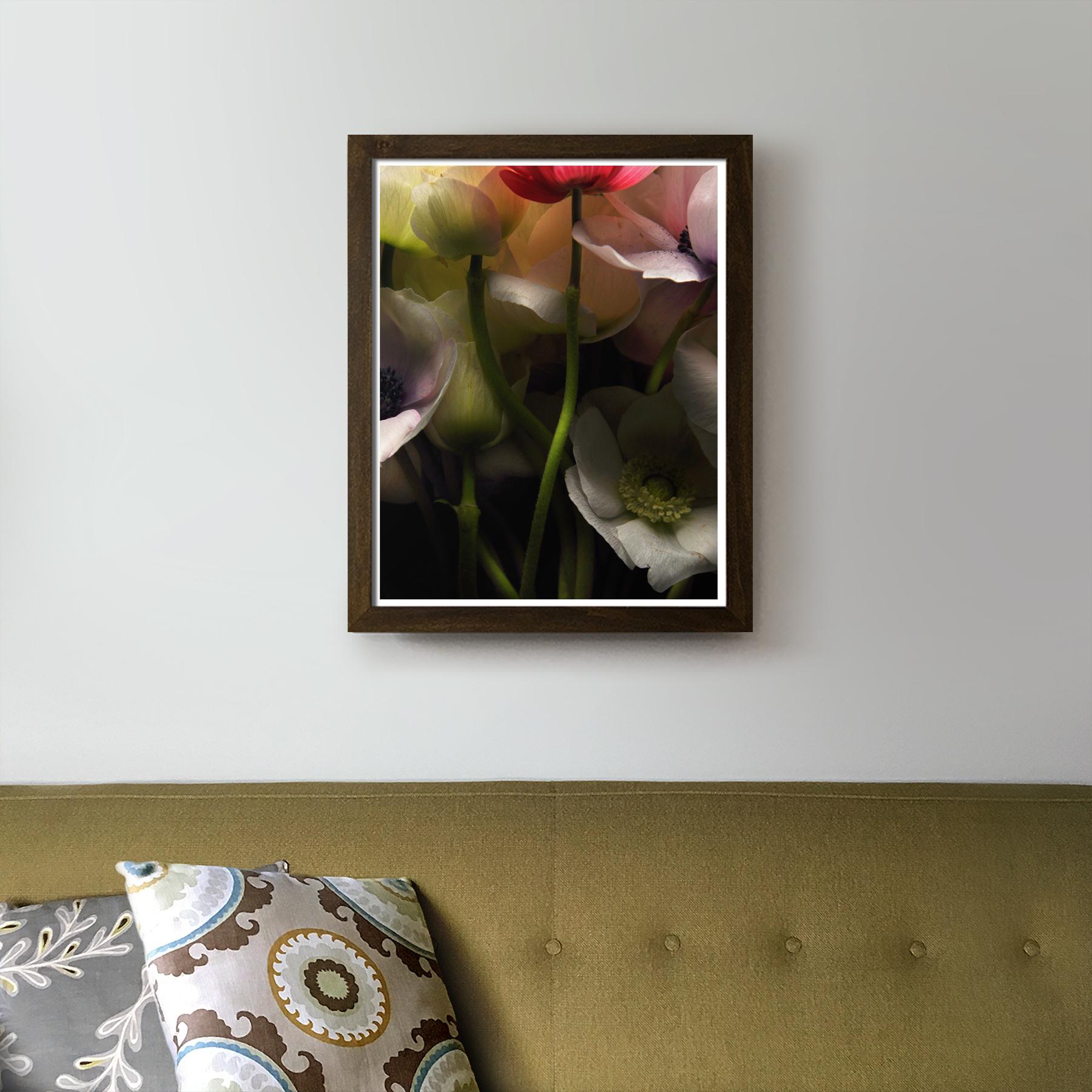 Dark Anemones in the Living Room