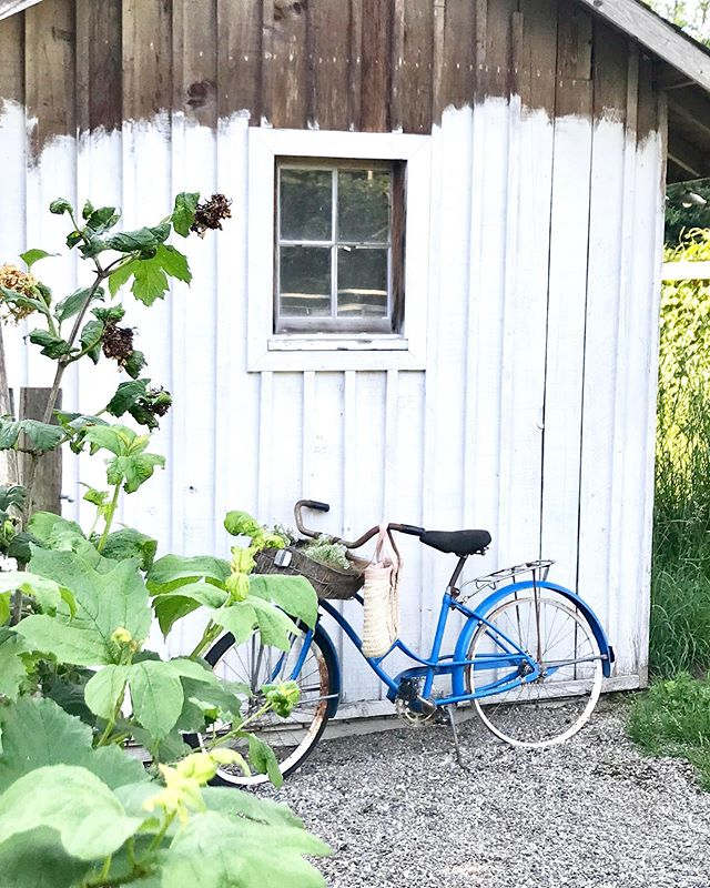 It turned out to be a beautiful afternoon and evening! ☀️ It's beginning to feel like summer! 🤗 This cute garden art bike is heading into our shop space tomorrow inside of @mandmantiques in Monroe, WA. 🚲 While the flowers in the basket are included, the little spotted duck is not. 😉 (Scroll through images... 🦆)