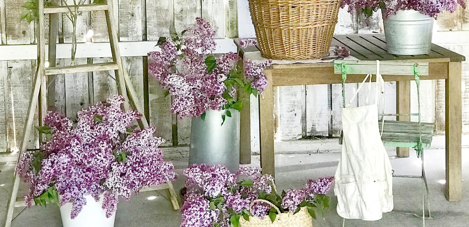 Lilac-Scrolling-Image.jpg