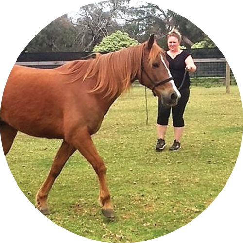 Steady Neddy our veteran Quarterhorse being trained by a parent -