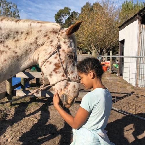 Big Rocky – Appaloosa x Stock Horse - Funny and naughty