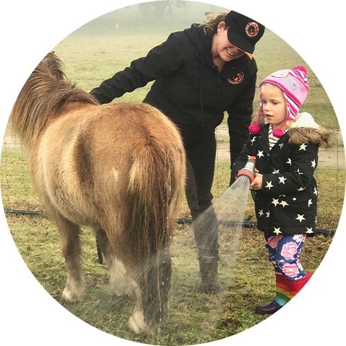 Goldie – Registered Miniature Horse - Smart and quick