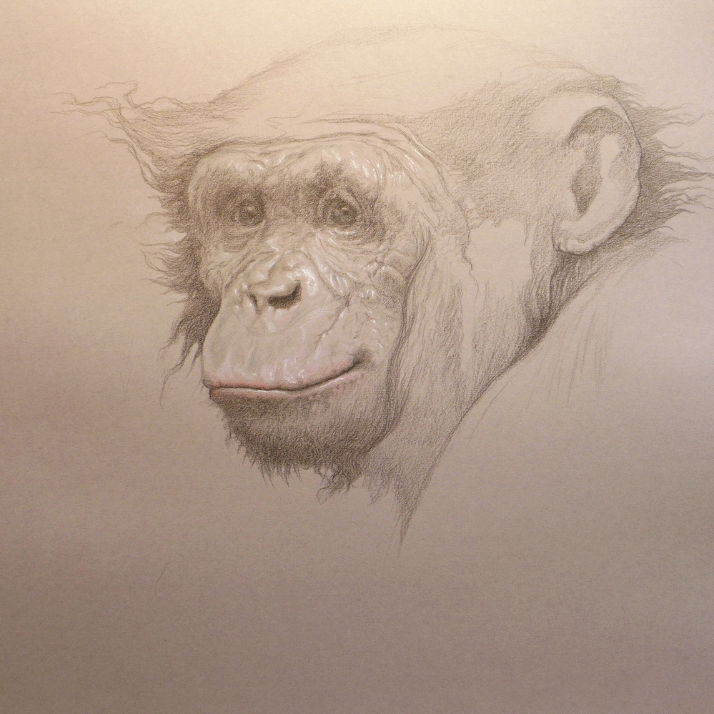 Study, Bonobo, 2015
