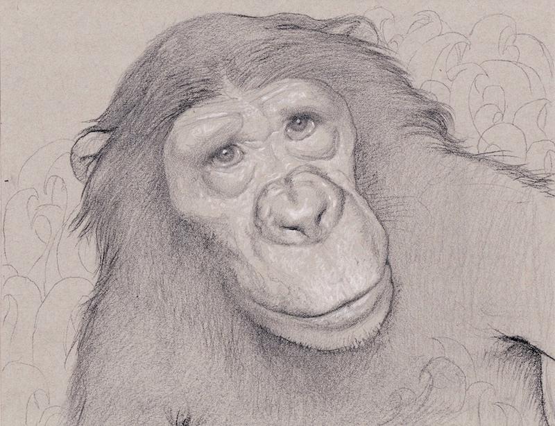 Bonobo Study, 2016