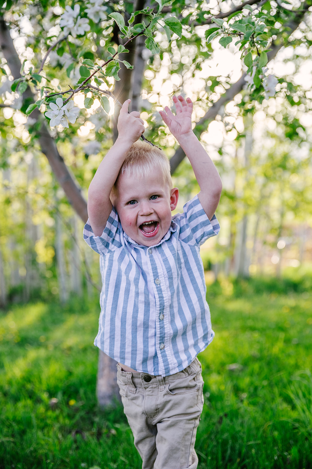 Happy boy in field of flowers. Summer time photos. Laughing boy in green fields Family photos. Ranch style photography. Apple Orchard photography. Professional family photos. Twin parents. Trees blossoming. Tree blossoming photos. #twinboy #appleorchardphotography #summertimephotos #familyphtos #blossomphotos #lookingintoeachotherseyes #happyfamily #formalpictures #greenfieldphotos #hotsummernights #laughingboy