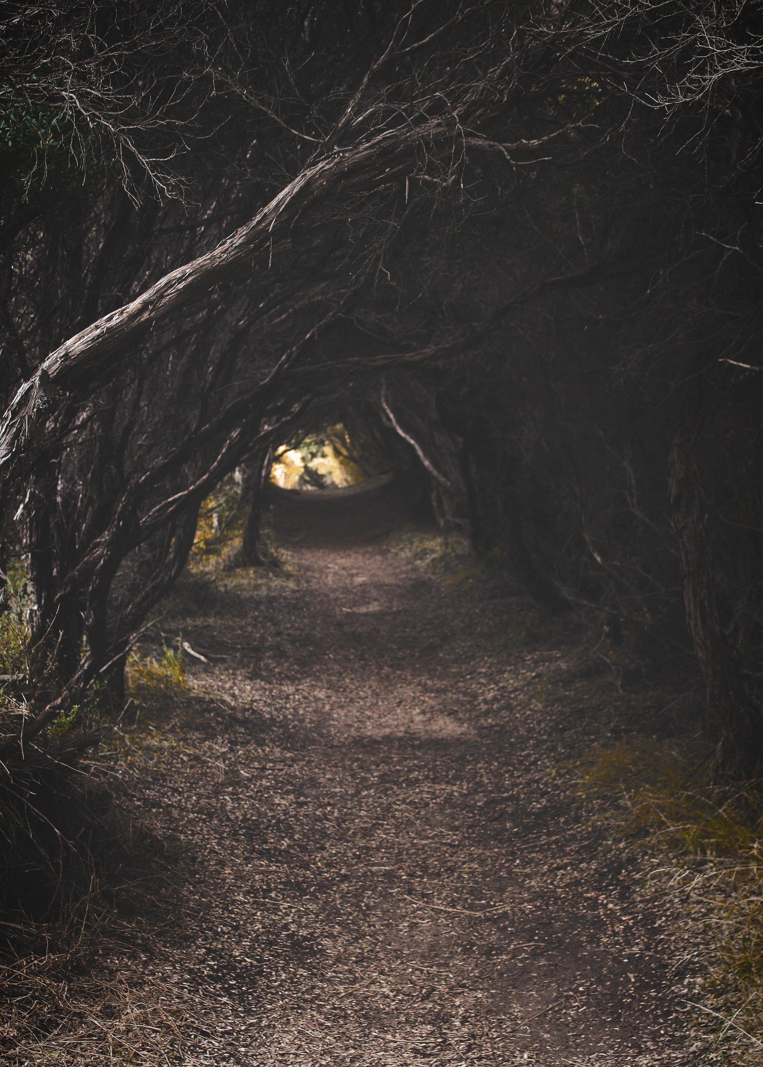 dark-eerie-environment-886051.jpg