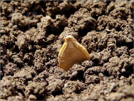 Pumpkin-Seed-1602276