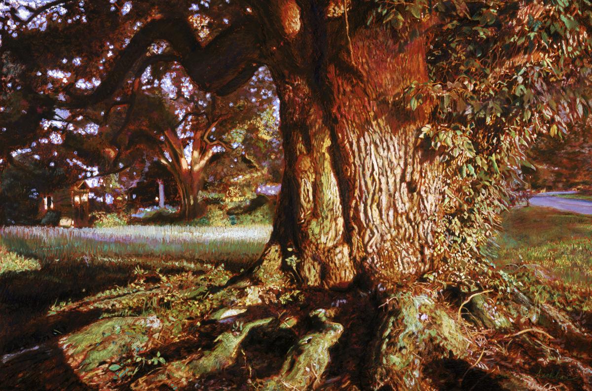 "Louisiana Oak , print edition print, 24"" x 36"", ed. 99, 2004"