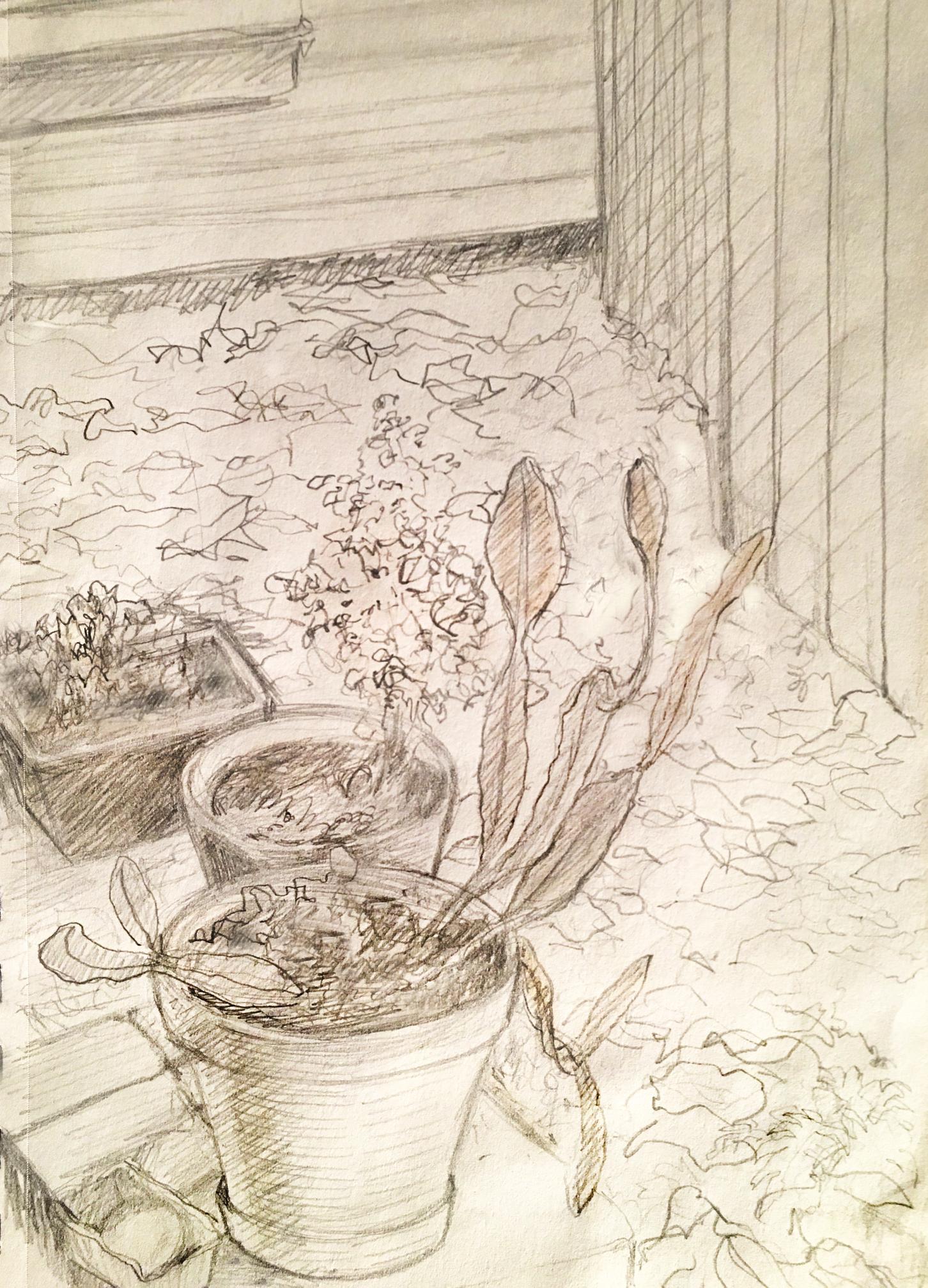 "Potted Plants , graphite, 8"" x 6"", 2018"