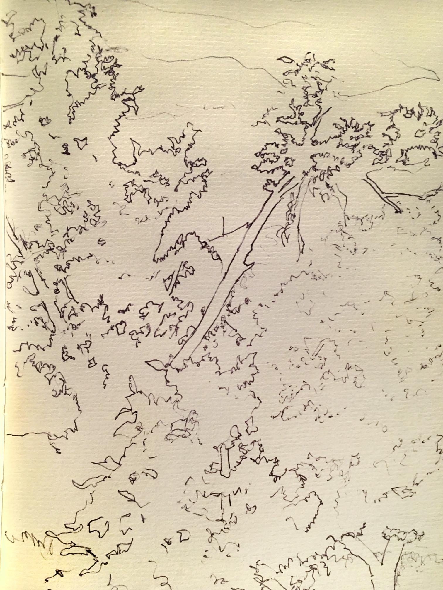 """Ozark Trees , ink, 7"""" x 5"""", 1994"""