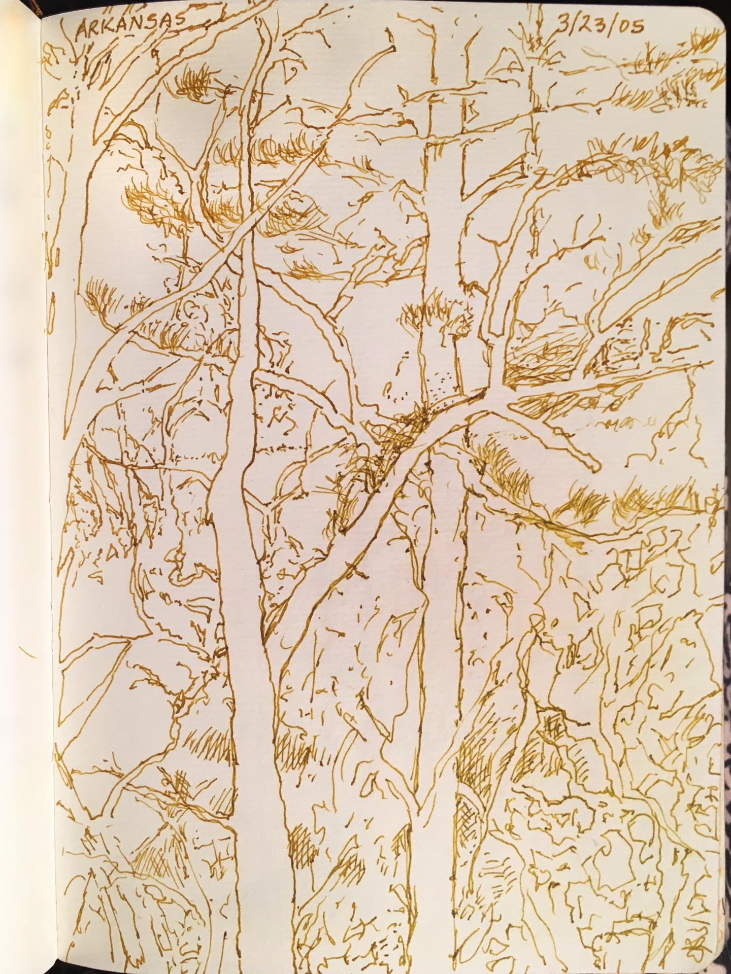 "Arkansas: Trees , ink, 5.5"" x 7.5"", 2005"
