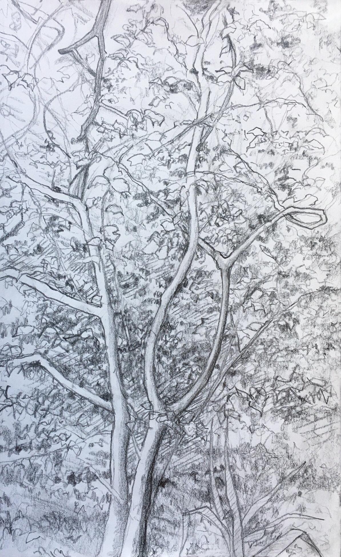 "Tree , graphite, 8"" x 6"", 2018"
