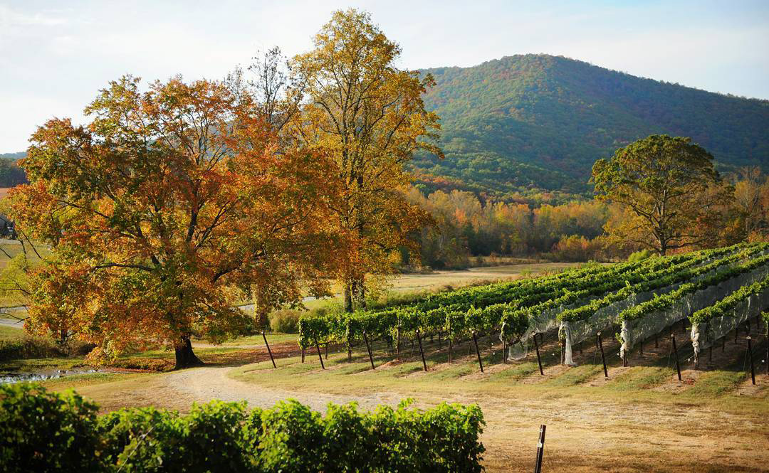 yonah-mountain-vineyards-1510687526.jpg