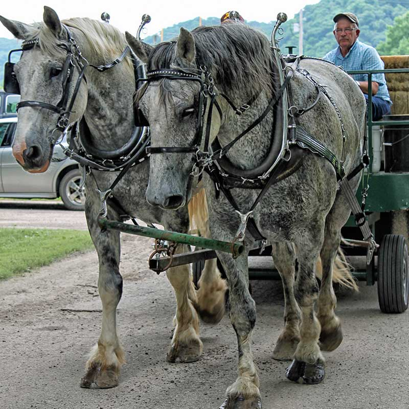 gd-parade-horses.jpg