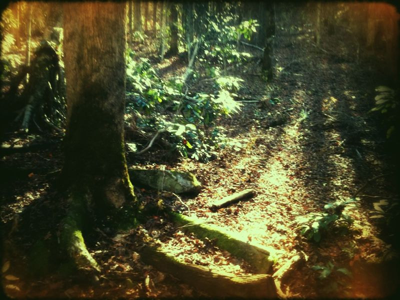 The Green Wood, such a good place to put a hammock.