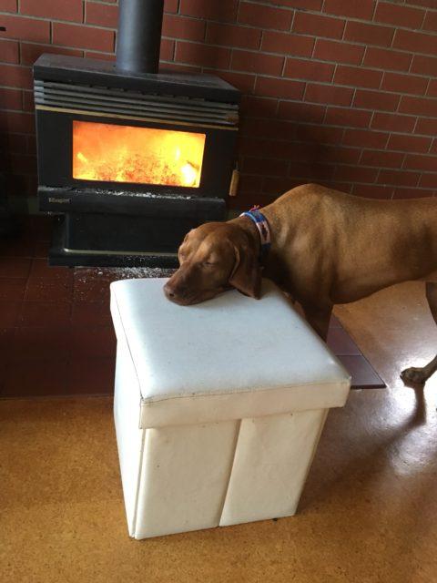 dog-fire-guilty-480x640.jpg